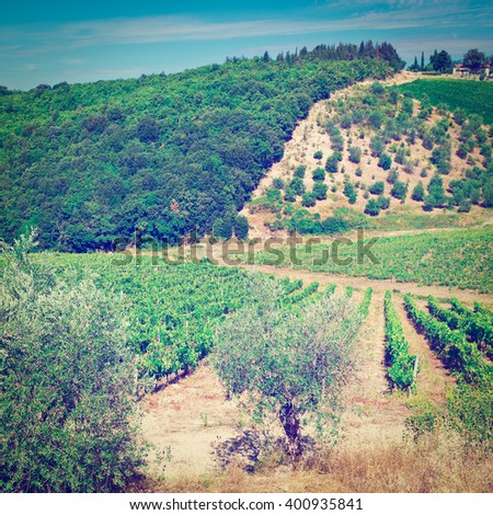 Hills of Tuscany with Vineyards and Olive Trees in the Chianti Region of Italy, Instagram Effect - stock photo