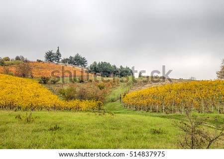 Hills of vineyards in autumn / Italy