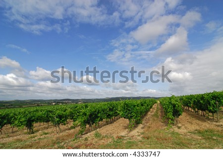 Hills on the road from Carcassonne to Limoux (Southern France) - Vineyards