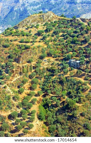 Hills with olive-trees and abandoned buildings in Calabria (Southern Italy)