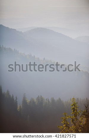 hills with pine forest in sunset light