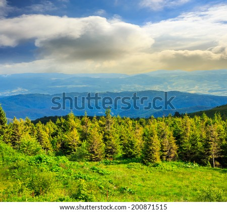 hillside of mountain range with coniferous forest