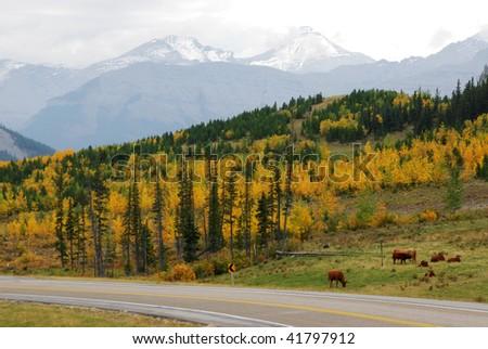 Hillside pasture in sheep river valley, alberta, canada - stock photo