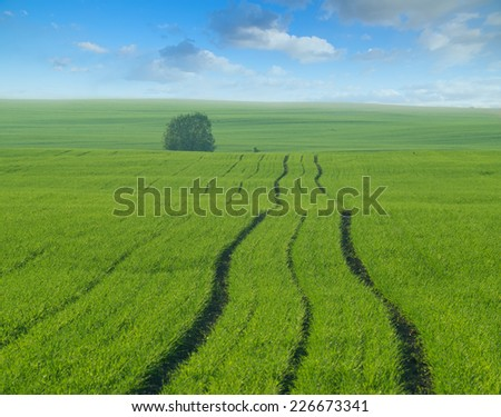 Hilly fields with first spring sprouts of wheat and lonely tree on the horizon. - stock photo