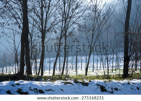 Hilly landscape in winter with snow, trees and mist
