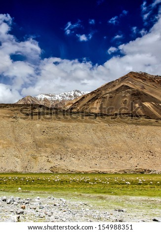 Himalaya Mountain Tops with snow and a flock of sheep and meadows and deep blue sky in summer - Ladakh, India - stock photo