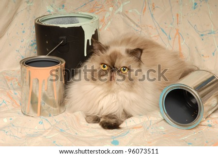 Himalayan Cat and Paint Cans - stock photo