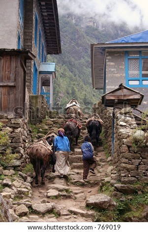 Himalayan Yak - Nepal - stock photo
