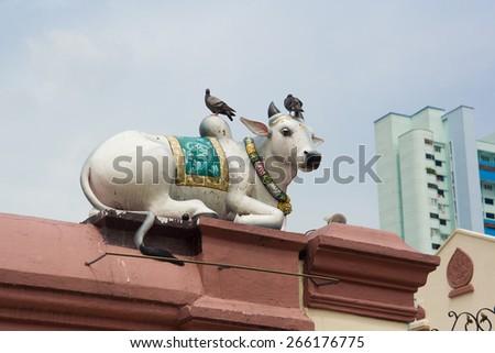 Hindu cow. - stock photo
