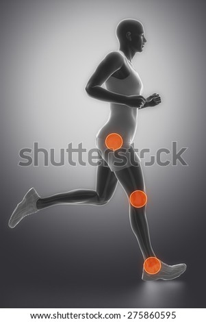 Hip, ankle and knee joint anatomy - stock photo