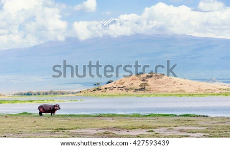 Hippo by the water in Kenya with Kilimanjaro mountain in the background - stock photo