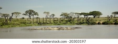 hippo pool at the Serengeti - stock photo