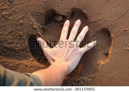 Hippo trace in proportion with the palm of a man in the sand - stock photo