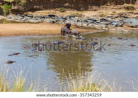 Hippos bathing in the Mara River