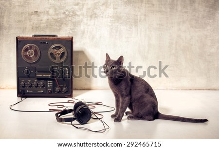 hipster pet cat with magnetophone and headphones - stock photo