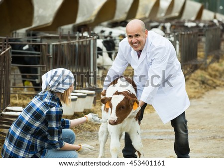 Hired girl helping vet with young cattle in cowhouse outdoors - stock photo