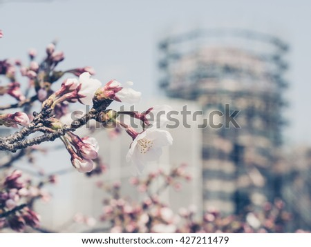 HIROSHIMA, JAPAN - MARCH 27: Hiroshima Peace Memorial Park on March 27, 2015 in Hiroshima, Japan. It is dedicated to the legacy of Hiroshima as the first city in the world to suffer a nuclear attack. - stock photo