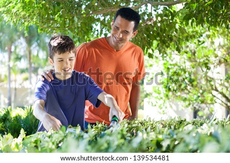 Hispanic father happily teaches his teenage son how to use hedge clippers to trim bushes in lush yard. - stock photo