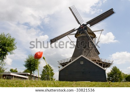 historic dutch oil mill with flower - stock photo