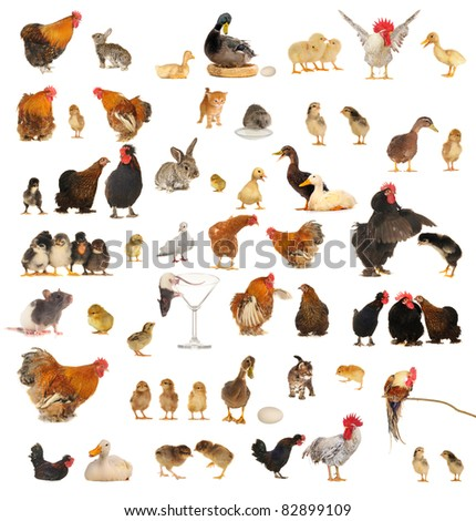 Histories about animals which live on a farm - stock photo