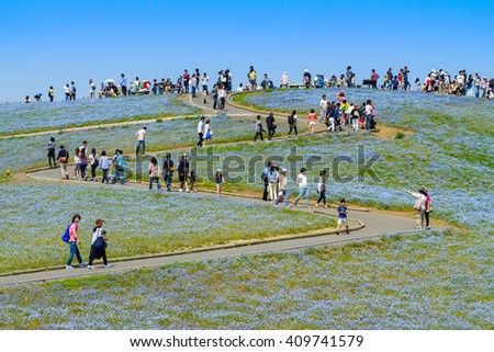 HITACHI SEASIDE PARK, JAPAN - May 2015. Crowd of tourists enjoying the view of Nemophila at Hitachi Seaside Park at Ibaraki, Japan. Hitachi Seaside Park is a popular tourist destination in Japan.