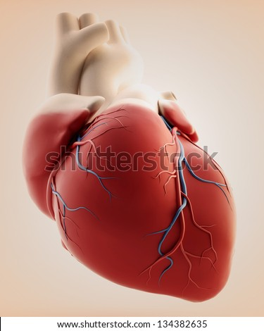 hman heart - 3d render - stock photo