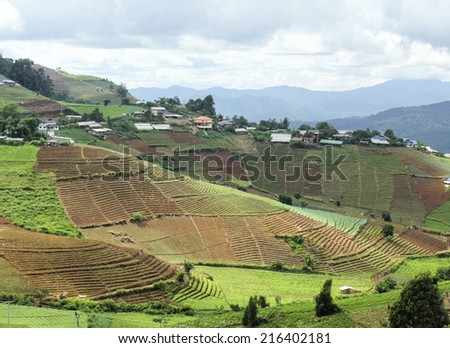 Hmong hill tribe village and terraced vegetable field ,Mae Rim district Chiang Mai province, Thailand. - stock photo