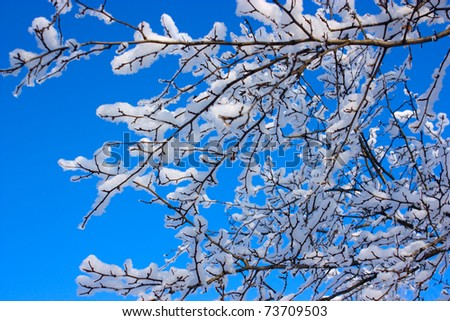 Hoar frost covering bare tree branches on a sunny Winter's day. - stock photo