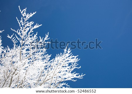 Hoar frost on tree branches