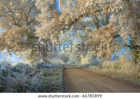 Hoar frost on trees, Cotswolds, Gloucestershire, England. - stock photo