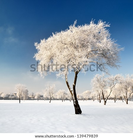 hoar-frost on trees in winter