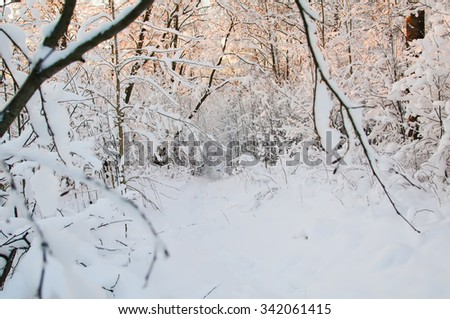 Hoarfrost and Rime on trees. Cold winter day at sunset. Frost and snow on the branches. Panorama of the winter forest. The winter landscape. Snow fairy forest. Pink rays of the sun. December new year - stock photo