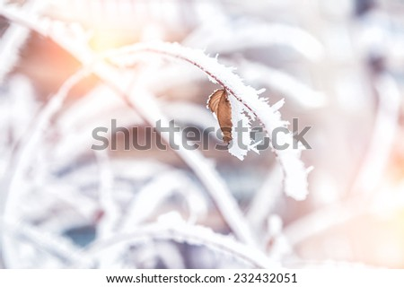 Hoarfrost and snow on the trees in winter forest. Beautiful winter nature. Small depth of sharpness - stock photo