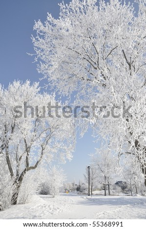 hoarfrost covered tree branch - stock photo