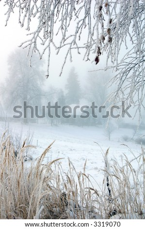 Hoarfrost for Christmas - stock photo