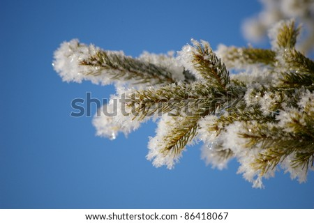 hoarfrost on a branch against blue sky