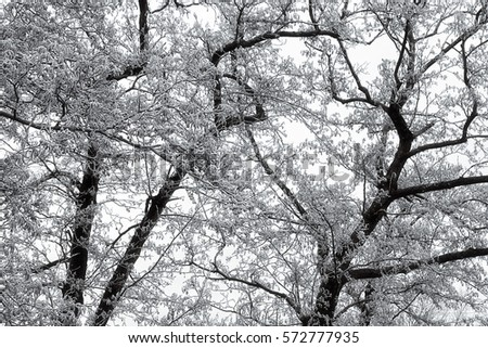 Hoarfrost on branches in winter.