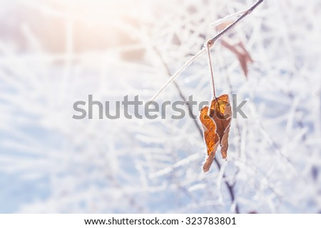 Hoarfrost on the trees in winter forest. Selective focus.  - stock photo