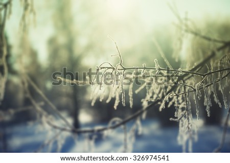Hoarfrost on the trees in winter forest. Selective focus. Vintage effect - stock photo