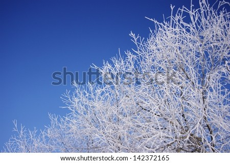 Hoarfrost on tree