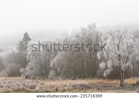 hoarfrost winter landscape - stock photo