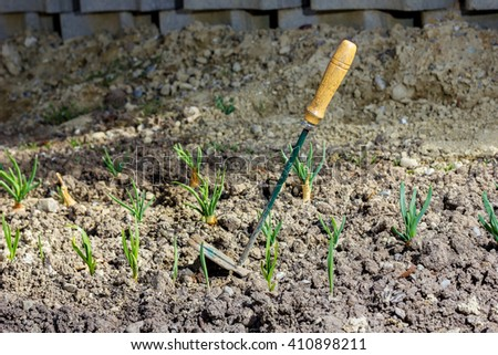 hoe at spring onions at soil field