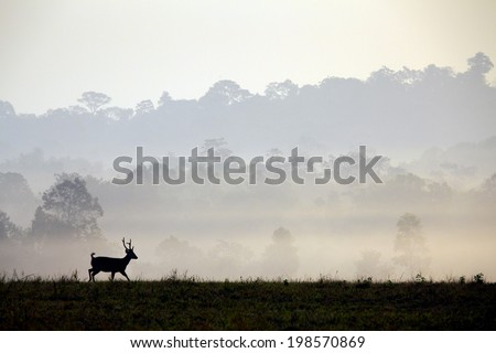 Hog deer are silhouette with beautiful forest landscape in the morning time. - stock photo
