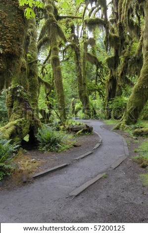 Hoh rain forest at Olympic National Park, Washington state - stock photo