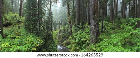 Hoh Rain Forest in Olympic National Park Washington