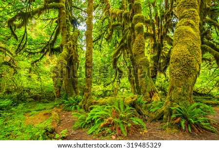 Hoh rain forest in Olympic national park, Washington - stock photo