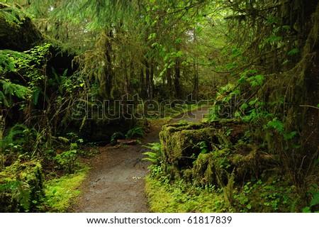 hoh rain forest in olympic national park, washington, usa - stock photo