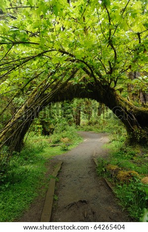 Hoh rain forest in olympic national park, washington, usa - stock photo
