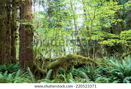 Hoh Rainforest in Olympic National Park Washington State USA - stock photo