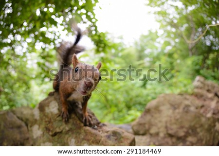 Hokkaido Squirrel in forest, by fish eye lens. - stock photo